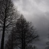 Dark empty at Chiba Urban Greening Nature Park 20070214-152913, Ичикава