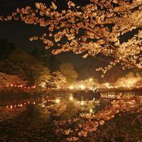 桜よ(Night view of MOBARA park), Мобара