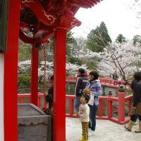 茂原公園の桜 (2010.4/3), Мобара