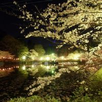 夜桜(The sight of cherry blossoms by night), Мобара