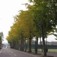 紅葉の並木道, Мобара