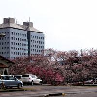 茂原市役所と豊田川周辺, Мобара