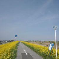 20140401 江戸川の海から38.25km地点(吉川市), Нода