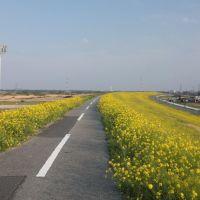 20140409 江戸川の海から37.25km地点(吉川市), Нода