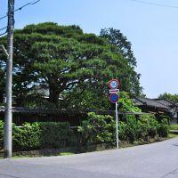 Noda shi 野田市, Нода