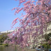 Chiba Park, Татиама