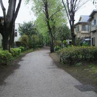17 歩いていると気持ちが良い、モグラのトンネル痕跡(笑)を発見, Кодаира