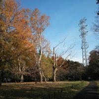 小金井公園, Кодаира
