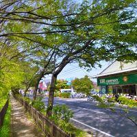 Koganei (玉川上水 & 五日市街道), Кодаира