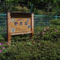 Wild Plant Garden, Митака
