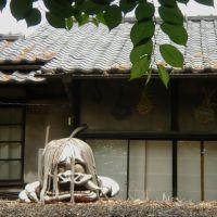 Jindaiji temple (深大寺-鬼太郎茶屋), Митака