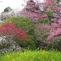 神代植物公園, Митака