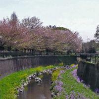 仙川 丸池公園, Митака