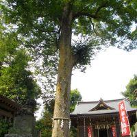 Aoi Shrine / 青渭神社, Митака