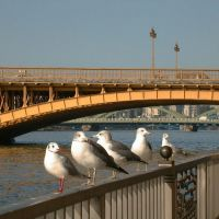 3 Bridges@Sumida-gawa river,In view of this side,Kuramae-bashi,Umaya-bashi,Komagata-bashi 隅田川の3橋、手前から蔵前橋、厩橋、駒形橋, Токио