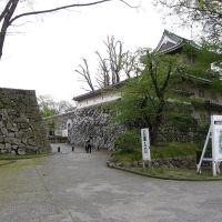 富山 城址公園 佐藤記念美術館, Камишии