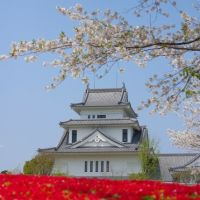 高岡天ヶ城公園 春, Такаока