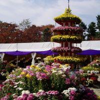Flower tower, Тояма