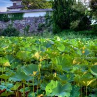 Lotus, Casle and the Clouds, Ногата