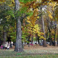 Asahikawa tokiwa park 旭川常盤公園 落ち葉拾い, Асахигава
