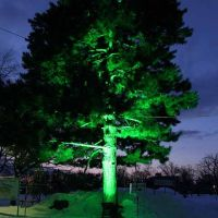 a tree at Tokiwa Park in Asahikawa, Асахигава