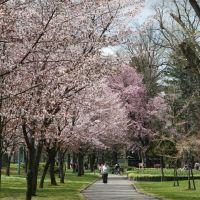 Tokiwa Park 常磐公園, Асахигава