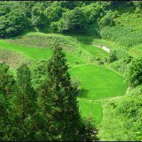 Ricefields at Ogawa Village (Summer), Ашибецу