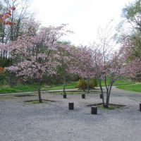Cherry blossoms in Miyama-park, Китами