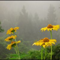 Rain Fall, Flora & Fauna, Ogawa village, Момбетсу