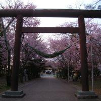 桜 参拝, Обихиро