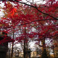灯篭(garden lantern), Обихиро