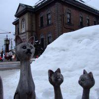 Cats in Otaru, Отару