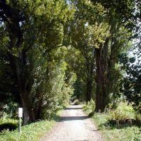 Row of poplars in Hokkaido University [北大ポプラ並木], Саппоро