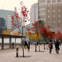 Fall Colors @ Sapporo Station, Саппоро