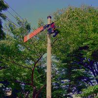 Daini Park, Yamagata City 山形市 第二公園 [ys-waiz.net], Саката