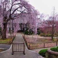 Kouzen-ji Temple, Yamagata 山形市 光禅寺, Тсучиура
