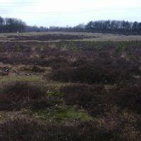 Wildwissel Terlet , Oostzijde, Апельдоорн