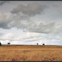 Terletsche Heide, Апельдоорн