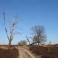 Dode bomen in natuurgebied Deelerwoud, Апельдоорн