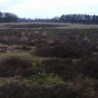 Wildwissel Terlet , Oostzijde, Арнхем