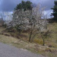 Bloeiende Bomen bij Terlet, Арнхем
