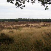 Deelerwoud (Kleine Heide), Арнхем