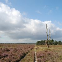 Nice views when walking at Deelerwoud some 10 km North from Arnhem, with free entrance, Арнхем