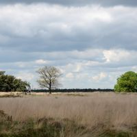 Fine views at Deelerwoud in springtime with fantastic walking possibilities!, Нижмеген