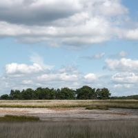 Deelerwoud 22 July 2012, with open areas (sand) for new heather vegetation inmidst of all grass!, Нижмеген