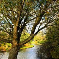 tree & river, Венло