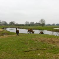 Horse World in meandering Regge., Альмело