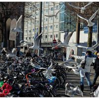 Amsterdam, Амстердам
