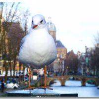 spostati che non vedo!, Амстердам