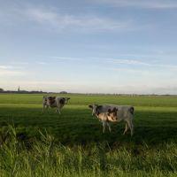 Westbeemster, Oosthuizerweg, Хаарлем
